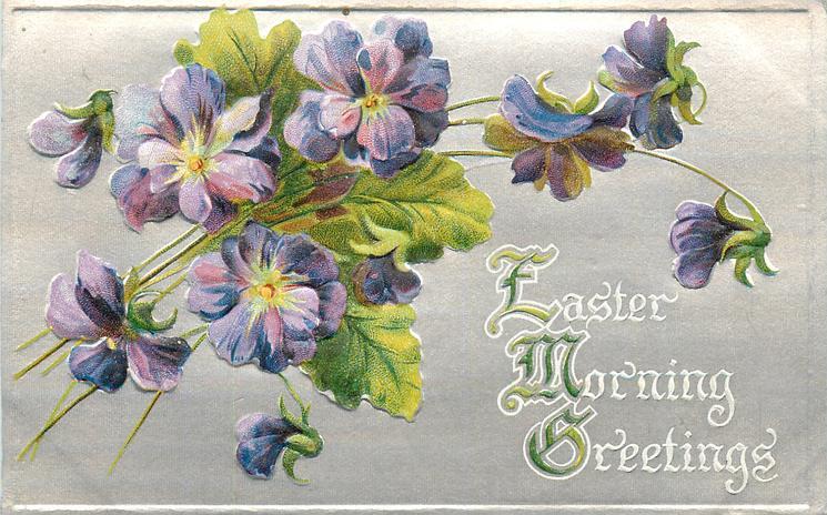 EASTER MORNING GREETINGS  violets