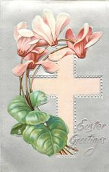 EASTER GREETINGS  pink/white cyclamen