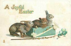 A JOYFUL EASTER  three rabbits, two are in box
