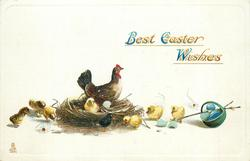 BEST EASTER WISHES  hen on nest eight chicks