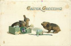 EASTER GREETING  two rabbits in box face right, one out of box faces left