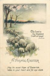A JOYFUL EASTER  sheep