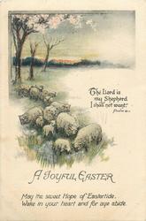 A JOYFUL EASTER  sheep
