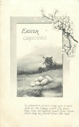EASTER GREETINGS  sheep & windmill