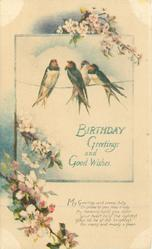 BIRTHDAY GREETINGS AND GOOD WISHES four swallows on wire, blossom