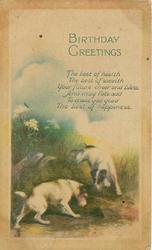 BIRTHDAY GREETINGS   two terriers