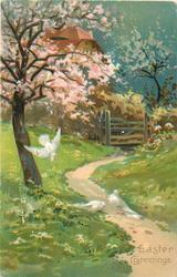 EASTER GREETINGS  three pigeons in front of blossom tree, path right to house at back
