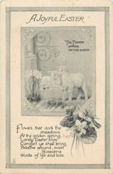 A JOYFUL EASTER  lambs & narcissi, violets