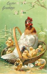 EASTER GREETINGS  white brown-necked hen in a basket, eight chicks
