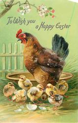 TO WISH YOU A HAPPY EASTER  hen by a bowl, seven chicks
