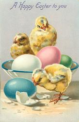 A HAPPY EASTER TO YOU  two chicks in bowl of coloured eggs, one in front with blue egg