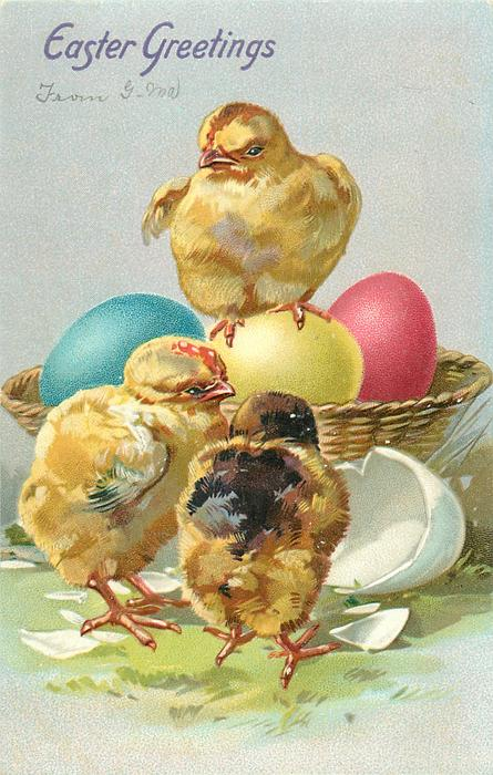 EASTER GREETINGS  chick stands on yellow egg in basket of coloured eggs, two chicks on ground in front with egg shell