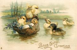 LOVING EASTER GREETINGS  three chicks in floating basket left, three ducklings right violets