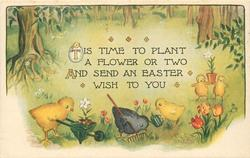 TIS TIME TO PLANT A FLOWER OR TWO AND SEND AN EASTER WISH TO YOU  chicks garden
