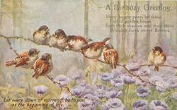 A BIRTHDAY GREETING  eight sparrows on thin branches above purple anemones