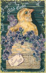 A GLAD EASTER  chick in basket with TO GREET YOU on label, violets, green background