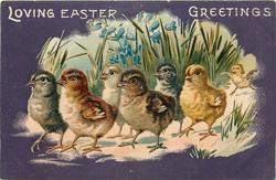 LOVING EASTER GREETINGS  seven chicks walk left in front of bluebells