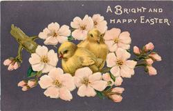 A BRIGHT AND HAPPY EASTER  two chicks sit on branch of blossom tree