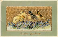 EASTER GREETINGS four chicks stand in purple flowers