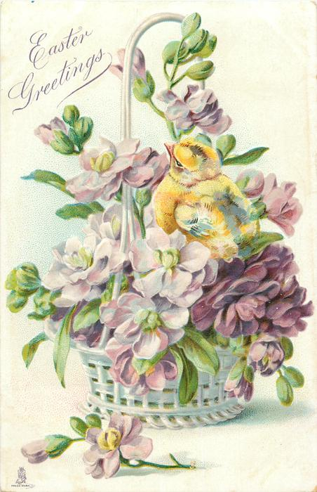 EASTER GREETINGS  chick faces left/back in basket of purple freesias & anemone