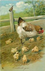 A HAPPY EASTER TO YOU  hen with eight chicks