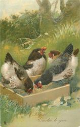 A JOYFUL EASTER TO YOU  four hens round square feeding box