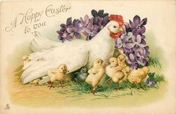A HAPPY EASTER TO YOU  hen sitting in front of violets, chicks around