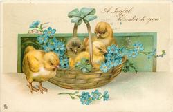 A JOYFUL EASTER TO YOU  three chicks in, & one beside basket with forget-me-nots