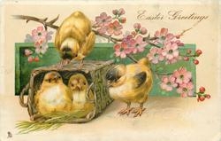 EASTER GREETINGS  two chicks in basket, one on top, one to right, blossom above