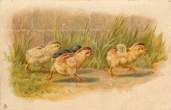 four chicks run right, three chasing the chick who has a worm