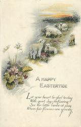 A HAPPY EASTERTIDE  sheep & lambs