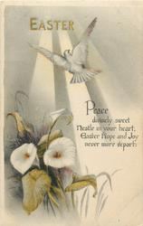 EASTER  sunbeams, dove over calla lilies