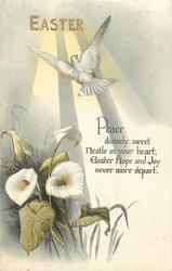 EASTER  white cross, sunlight, dove, calla lilies
