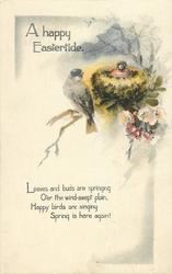 A HAPPY EASTERTIDE  finches & nest above right