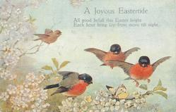 A JOYOUS EASTERTIDE  bullfinches over blossom, butterfly