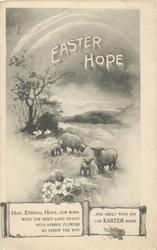 EASTER HOPE  sheep & lambs
