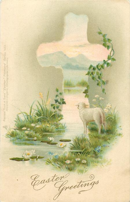 lamb on edge of water, facing away, lily pads with flowers