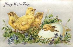 HAPPY EASTER TIME  chick breaks out of egg, three chicks left, two watch and left one faces away, violets around