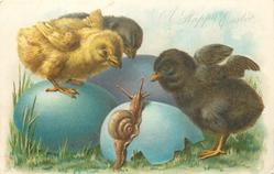 A HAPPY EASTER three blue eggs, three chicks, two black and one yellow, and snail