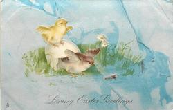 LOVING EASTER GREETINGS  brown chick leaves shell, yellow one above, blue/grey background