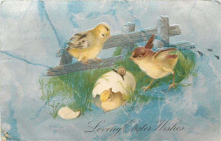 LOVING EASTER WISHES  chick in shell, two others watch snail on eggshell,  blue/grey background