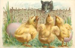 A HAPPY EASTER  cat looks over fence at three chicks