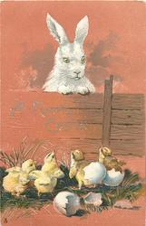 A HAPPY EASTER  rabbit looks over fence at four chicks, two still carry bits of shell