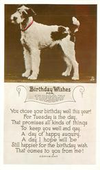 BIRTHDAY WISHES FOR TUESDAY  terrier stands facing left