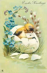 EASTER GREETINGS  chicks in bottom part of eggshell with letter in beak, pussy willow behind, forget-me-nots left