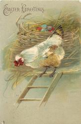 EASTER GREETINGS  hen at top of ladder, coloured eggs in basket in straw behind