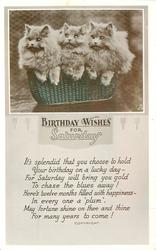 BIRTHDAY WISHES FOR SATURDAY   three persian kittens in basket