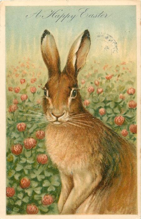 A HAPPY EASTER  rabbit sits in clover, faces left, looks front