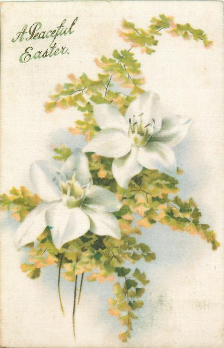 A PEACEFUL EASTER  two white hellebores with green/yellow flowers & foliage