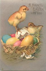 A HAPPY EASTER TO YOU  two chicks with colored eggs in basket, one stands on white eggshell